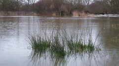 Flooded field Nr Merley/Canford Magna