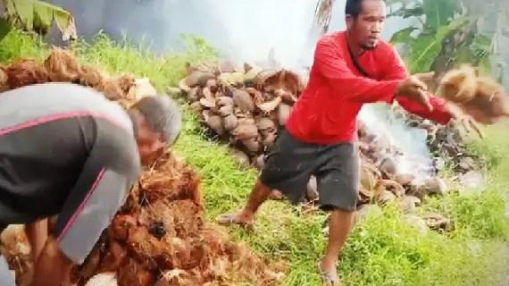 Legislator Kotim dukung investor garap potensi kelapa