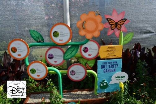 The 2017 Epcot International Flower and Garden Festival - Grow your own Butterfly Garden