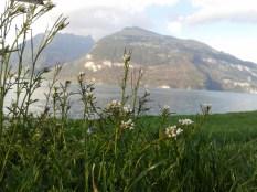 More Suisse (interlaken) 306