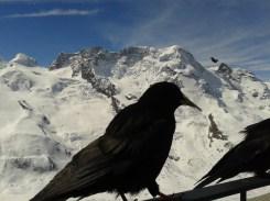 Zermatt 151