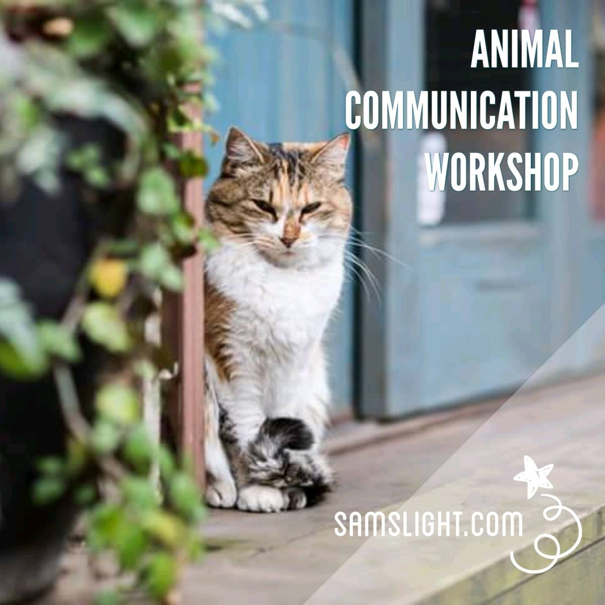 Animal Communication Course 動物傳心課程