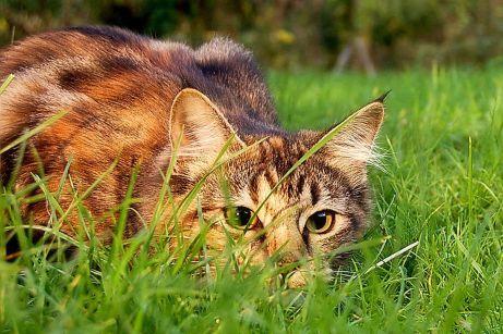 cat-in-yard-58a6d29b3df78c345b516d0d