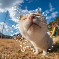 Animal Communication Course 動物傳心課程