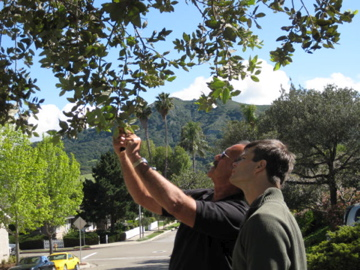 Tom explaing the finer points of oak pollination to me.