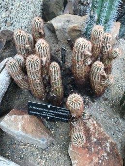 This cactus looked familiar.