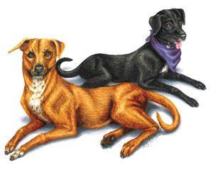 Tim & Lyla Pet Portrait