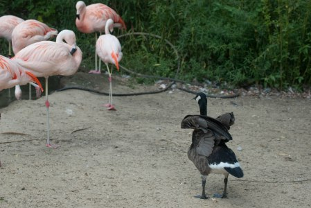 I honestly wanted the geese and flamingos to get into some West Side Story style throw-downs, because I am 12.