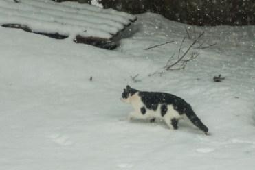 15-2-15 Snow Birds-1