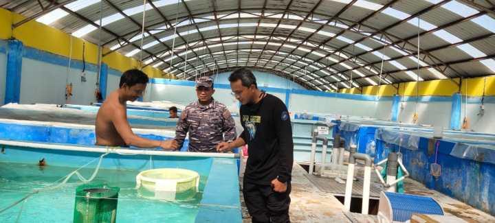 Penyelundupan Benih Lobster Digagalkan Lanal Batam, SamuderaKepri
