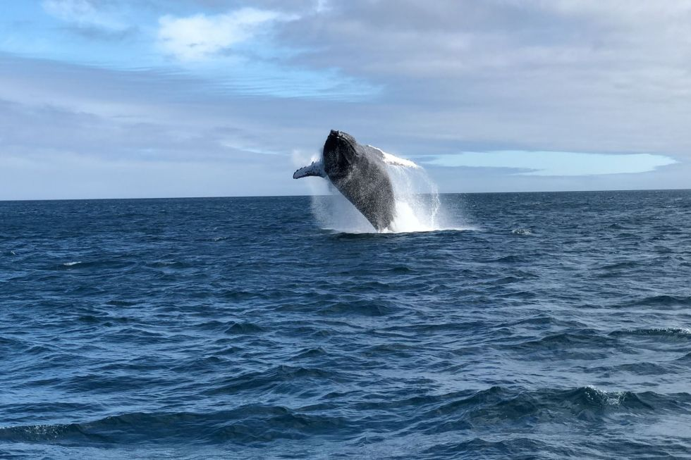 The Best Spots for Maldives Whale Watching