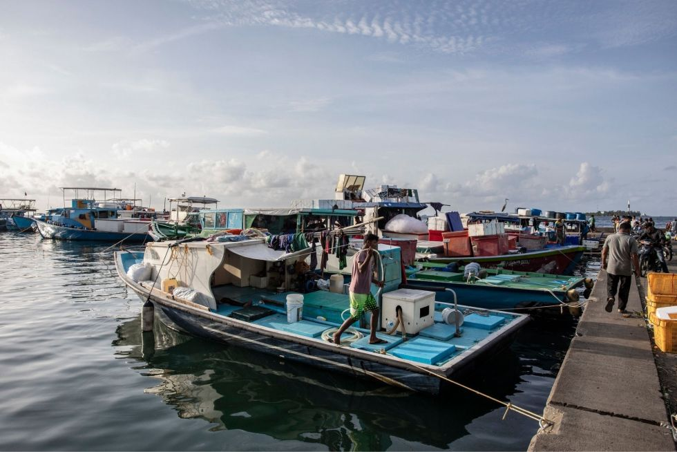 Visit the Local Fish Market in Malé (courtesy:  alexanderbrown)