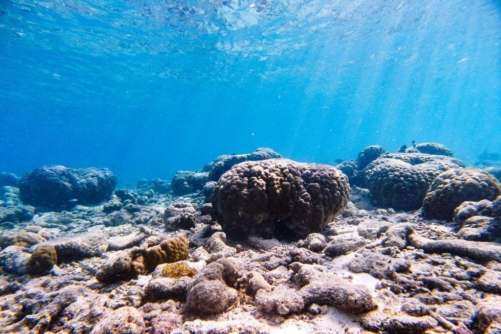 Coral Planting Activity in Villingili (Villimalé) Island, Maldives