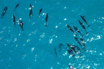Maldives Sunset Dolphin Cruise w/ Price & Itinerary