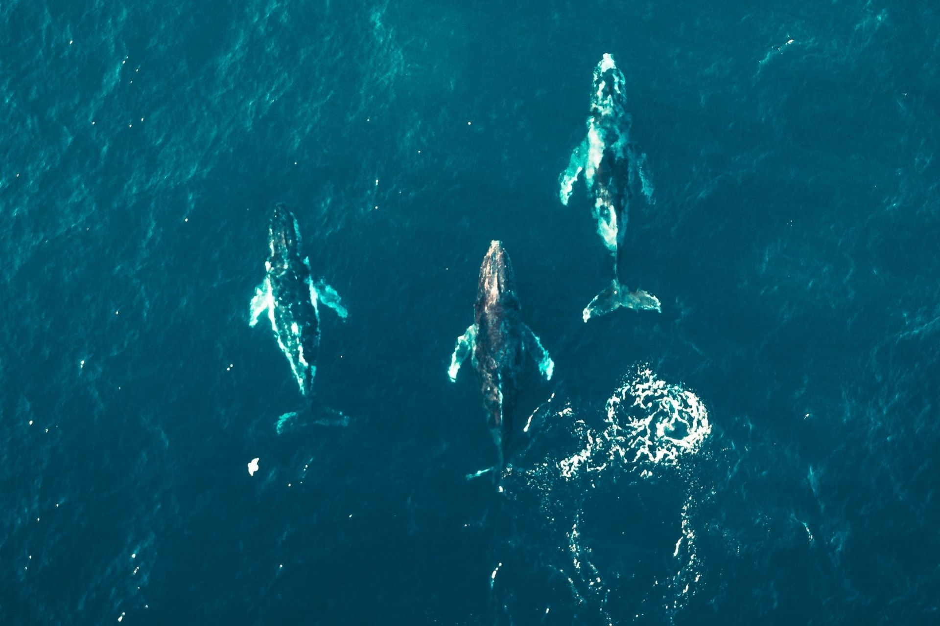 Whales in the Maldives