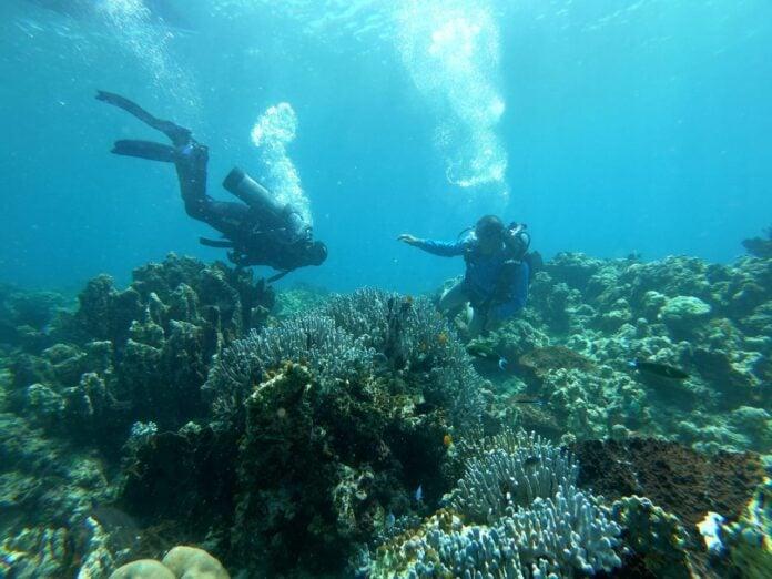 Nikmatnya Diving di Pulau Banyak