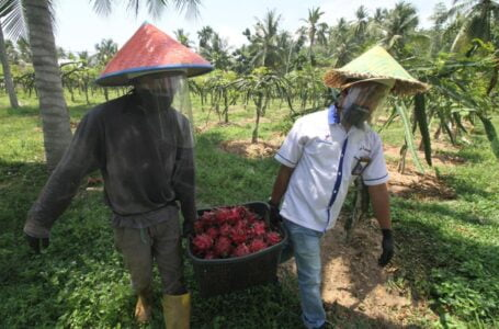 PT Perta Arun Gas Terus Kembangkan Kebun Agrowisata