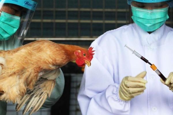 Geger, Ditemukan Virus Flu Burung Varian Baru di China, 2 Orang Terpapar