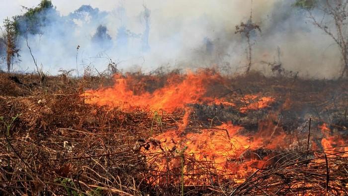 Lahan Seluas 7 Hektare di Aceh Terbakar