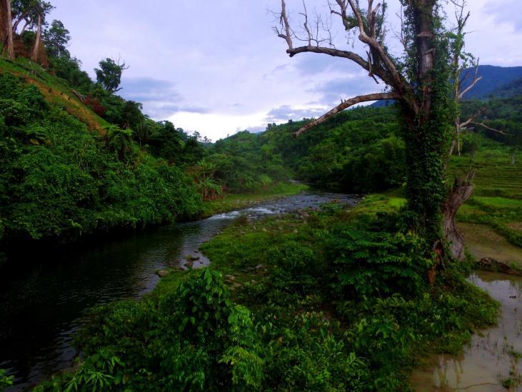 Flusslauf in Vietnam