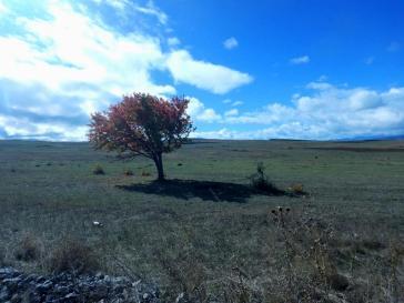 Einsamer Busch in der Ebene