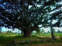 Ein riesiger Baum