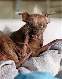 Ugliest Dog Contest