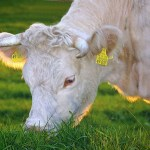 アルビノの寿命は短い?人間や動物で違う?原因や治療法について