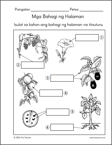 halaman_p2