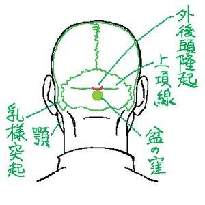 後ろ頭の構造