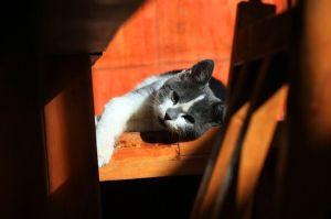 cat-56753_640