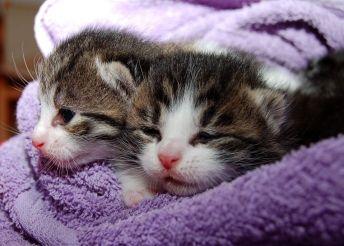 Consolar a tu mascota. Gatos