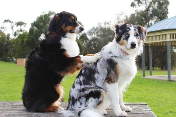 Consolar a tu mascota. Perros.