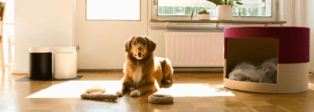 alojamientos-pet-friendly