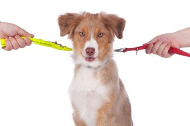 mascotas y divorcio