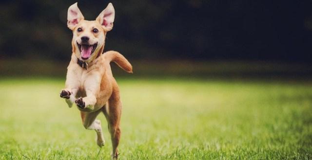 Convenio Europeo sobre Protección de Animales de Compañía