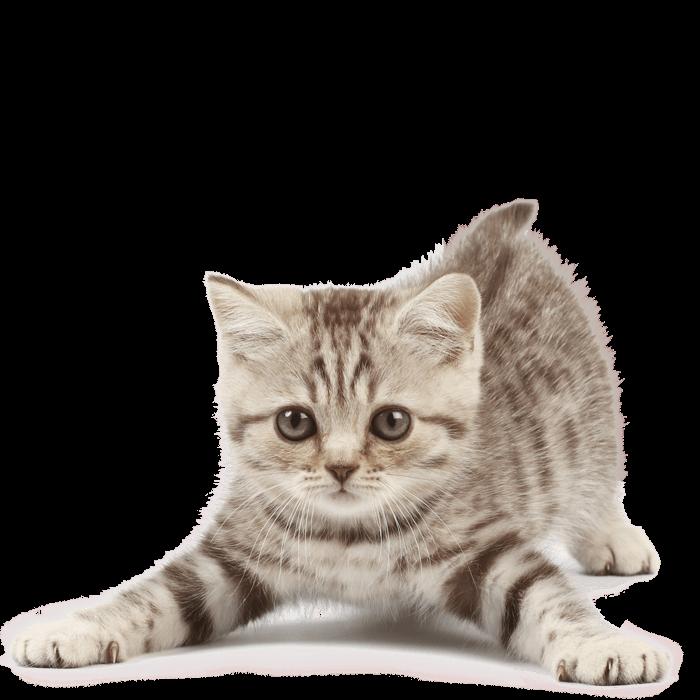neonatal kitten san antonio