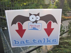 Bat Talks