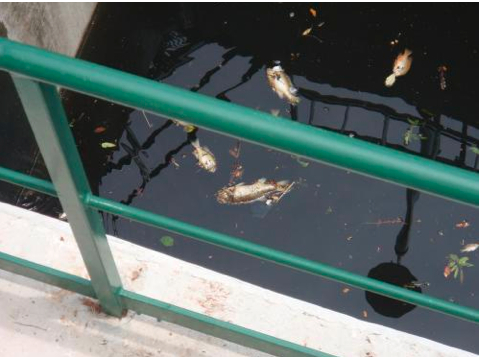 After rain, contaminants from streets and sidewalks are washed into the San Antonio River, raising bacteria levels and killing many aquatic life. Photo courtesy of SARA.