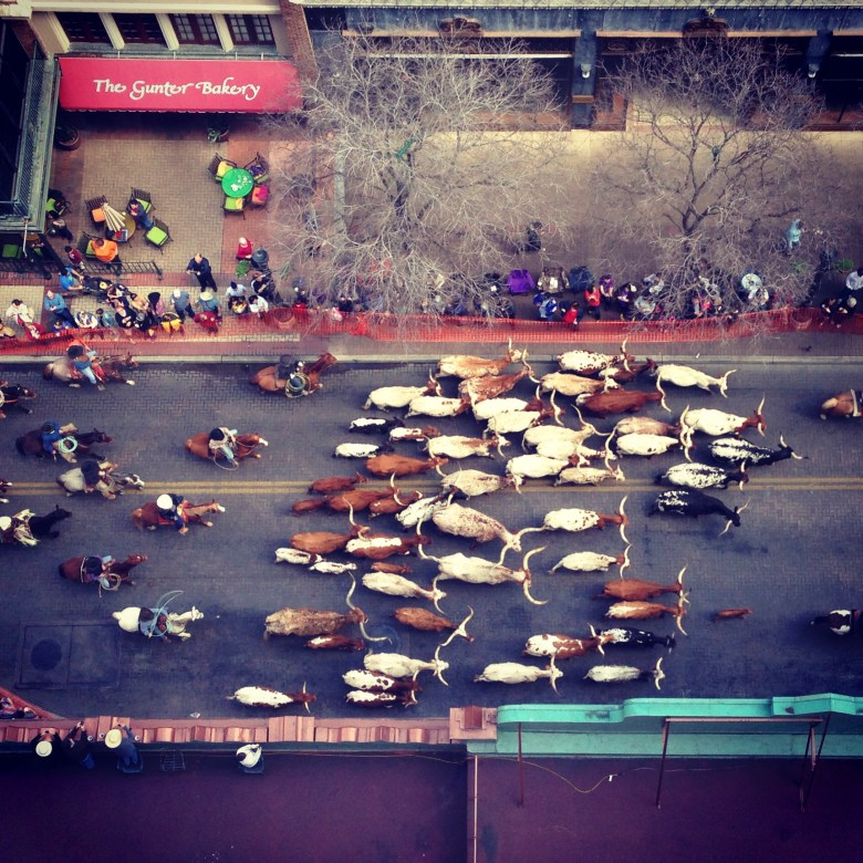 The 2013 Western Heritage Parade and Cattle Drive as seen from the 12th floor of the Majestic. Photo by Kara Gomez.
