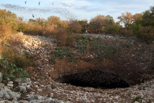 Millions of bats emerge from the mouth of Bracken Cave, a mere 20 minutes north of downtown San Antonio. Photo courtesy of EdwardsAquifer.net.