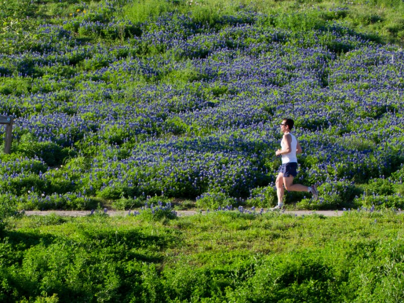 Blue bonnets along the trail help make the Mission Reach a great place to go for a run. Photo courtesy of SARA.