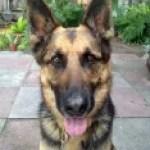 Sirius Charlotte Luongo's Dog