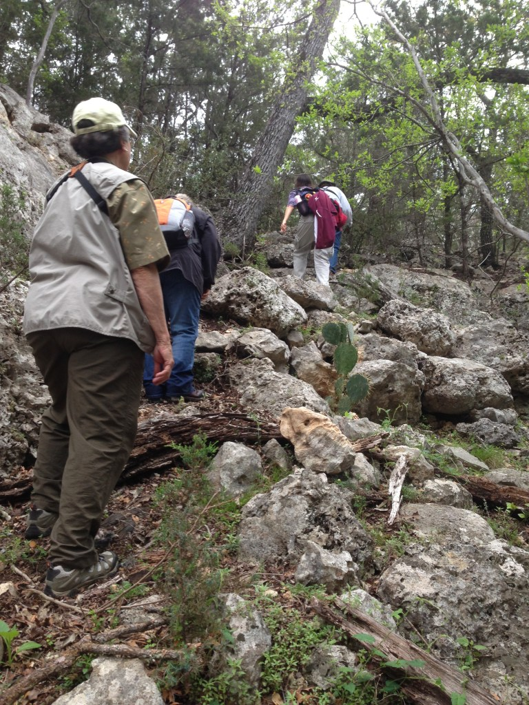 Master Naturalists climb through Honey Creek State Natural Area in search of golden cheeked warblers. Photo by Bekah McNeel