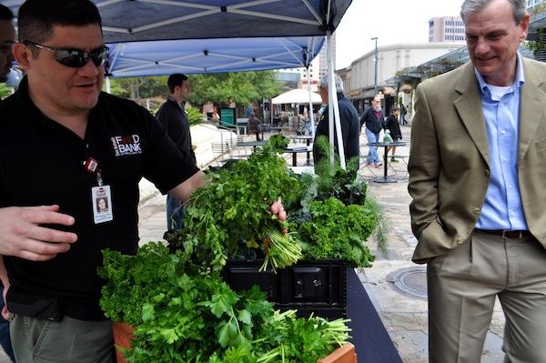 John Velasquez of the San Antonio Food Bank organizes fresh produce during the Main Plaza Farmers Market. Photo by Iris Dimmick.