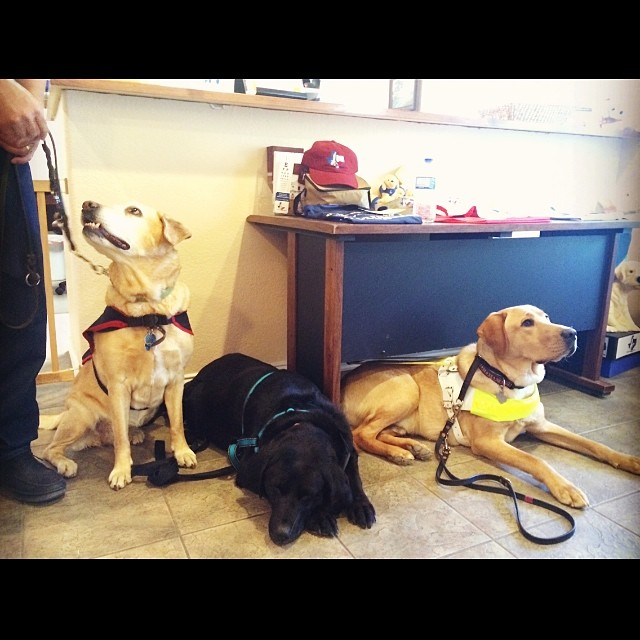 Guide Dogs of Texas raised $13, 841 during the Big Give SA.