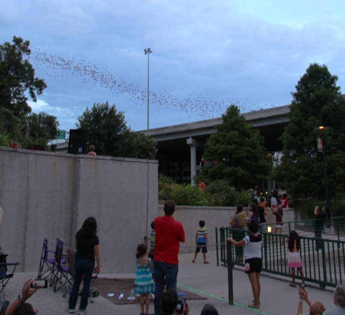 Bat Loco guests watch a flock of bats fly from the Camden Street Bridge during a Bat Loco event. Photo courtesy of the San Antonio RIver Authority.
