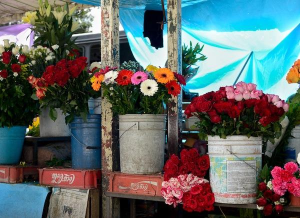 A splendid display of flowers at a marketplace in Cuernavaca. Photo by Mark Menjivar.