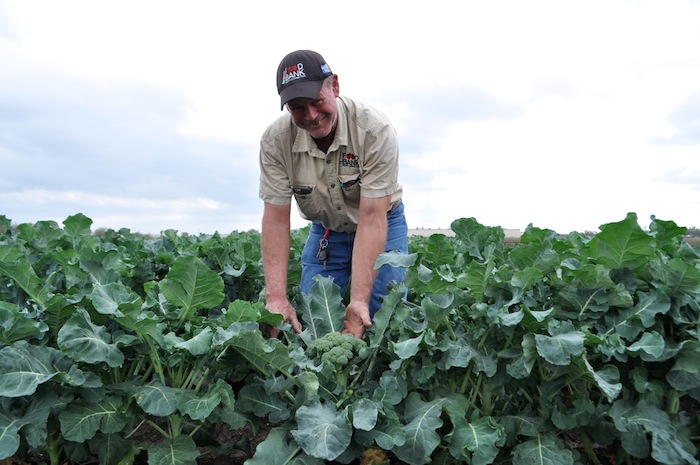 Mike Persyn, San Antonio Food Bank's head farmer, smiles with one of many crowns of broccoli on the Food Bank's new crop land behind the warehouse. Photo by Iris Dimmick.