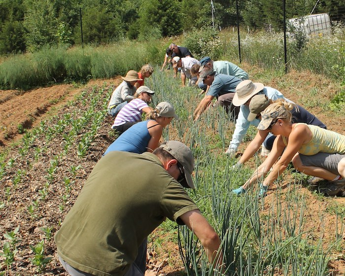 Organic methods often require more hands-on work rather than relying on chemical pesticides or fertilizers. Photo Courtesy of TOFGA